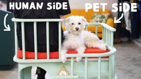 Vous pouvez maintenant avoir cette chaise conçue pour travailler à côté de votre chien
