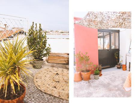 plantes extérieures bergamotte