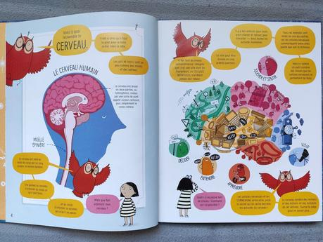 Le cerveau. Usborne – 2021 (Dès 6 ans)