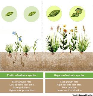 #trendsinecologyandevolution #rétroactionplantesol #diversitévégétale Systèmes de Rétroaction Plante-Sol et Dynamique Temporelle du Rapport Diversité Végétale – Productivité