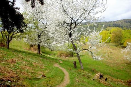 Idées d'évasion en Alsace-Lorraine : Vallée de la Doller © French Moments
