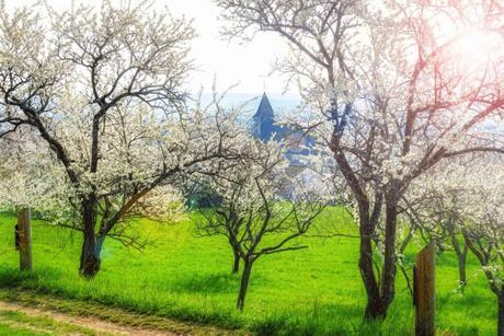 Photos de printemps en Lorraine - Lucey, Toulois © French Moments