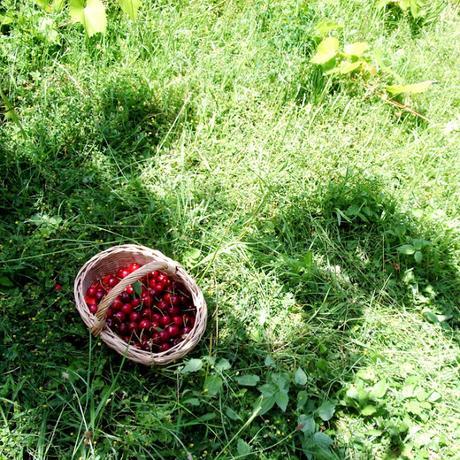 Panier de cerises - Photo Rachel Oo pour La Fille du Consul - cerises des beaux jours