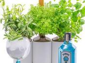 Bombay Sapphire présente Giny Garden, avec Prêt Pousser