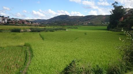 Saison riziere Madagascar