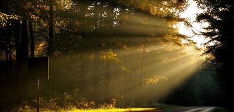 rayons de soleil dans une forêt