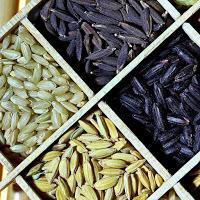 ALIMENT :Le riz, une plante fascinante !