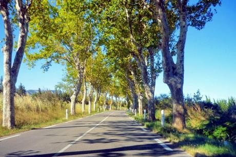 France d'antan - Les routes de France aux alentours de Saint-Rémy-de-Provence © French Moments