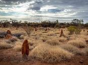 nids termites dans l'art aborigène australien