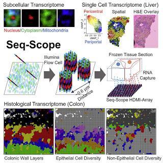 #Cell #transcriptomiquespatiale #Seq-Scope #Illumina Examen microscopique de la transcriptomique spatiale à l'aide de Seq-Scope