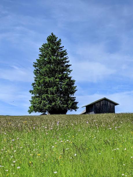 Buckelwiese in Mittenwald — 12 Bilder