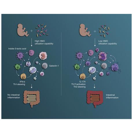 #Cell #bifidobactérie #systèmeimmunitaire Le système immunitaire contrôlé par les bifidobactéries marque de son empreinte le début de la vie