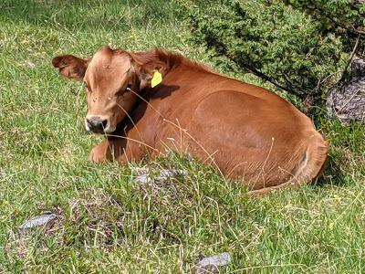 Isar, Riedboden und glückliche Kühe zwischen Mittenwald und Scharnitz — 19 Bilder