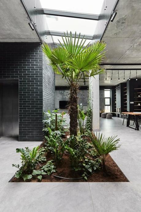 oasis végétale centre salon dalle béton puits lumière