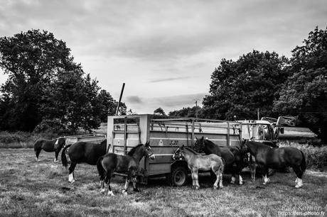 #cheval breton à #Bannalec #Bretagne #Finistère