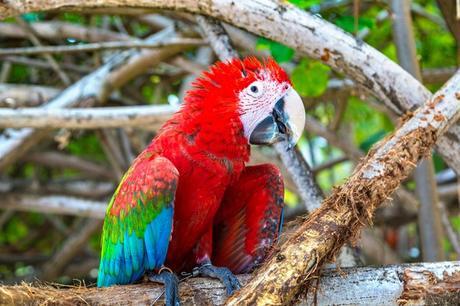 Les perroquets de l'Orénoque