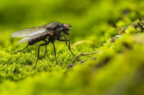 Comment se débarrasser des mouches naturellement ?