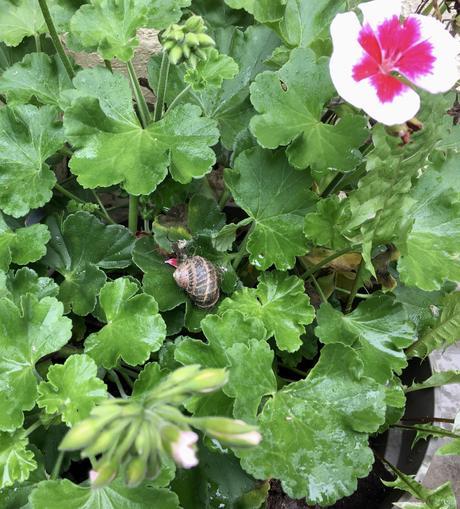 Projet 52: dans un pot de fleur