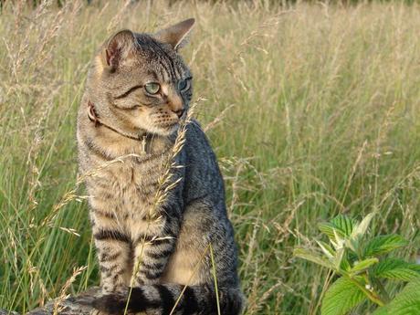 Comment mettre un collier à un chat?