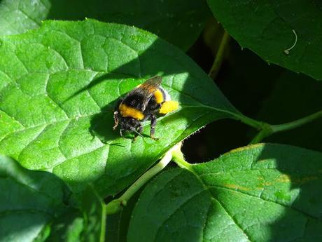 abeillehautsdefrancenaturebiodiversite