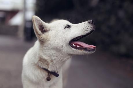 Comment soigner l'hygiène dentaire des chiens ?