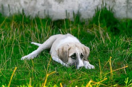Comment occuper un chien qui s'ennuie ?