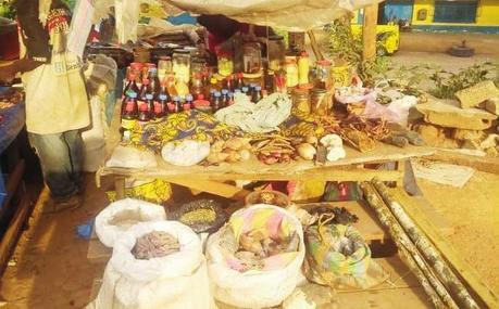 Cameroun : La vente des remèdes traditionnels nourrit son homme