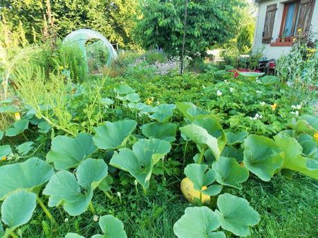 Quelques photos de mon jardin urbain en permaculture avant les grosses chaleurs