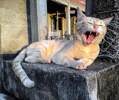 L'Éternuement chez le  chat.