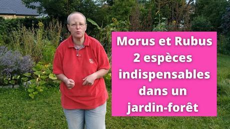 Morus et Rubus, 2 espèces indispensables dans un jardin-forêt (vidéo)