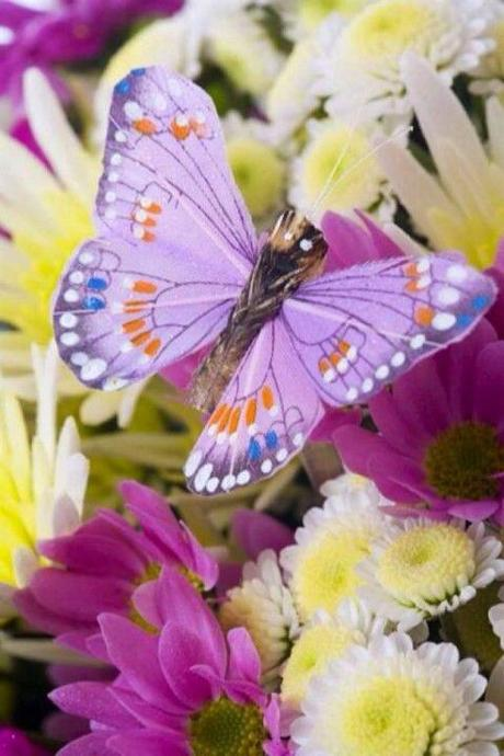Divers - Beauté des papillons - 3