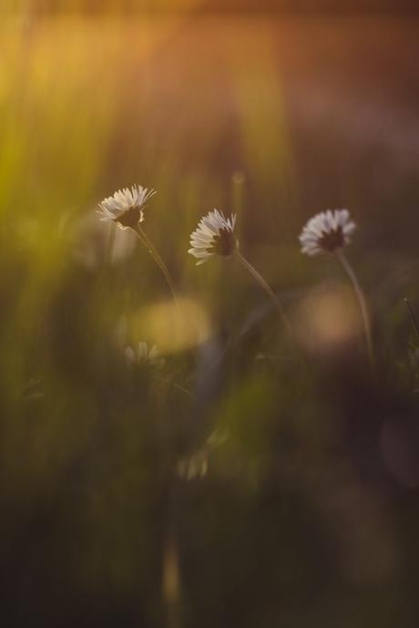 Redécouvrir les plaisirs simples, et les photographier