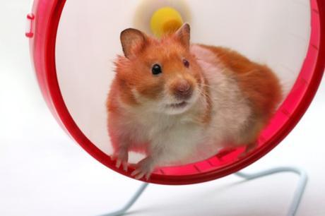 Sortir de la roue de hamster, de sa mélasse de vie dans laquelle on tourne