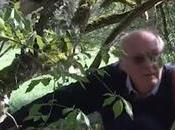 L'arbre structure formation complète Françis Hallé (vidéo)