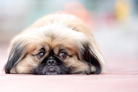 Races de chien qui ne s'ennuient pas: notre avis