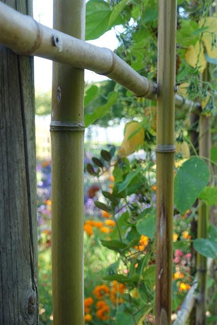 un ptit coup de bambou