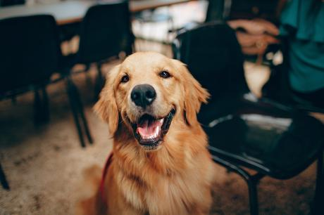 Pourquoi acheter de l'huile de lin pour votre chien?