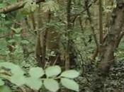 plantes sauvages cueillir durant l'automne