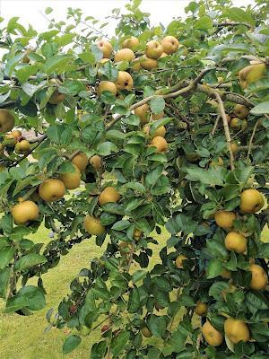Confiture de pommes caramélisées aux noix