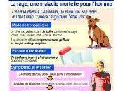 rage animal France