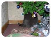 conciliation décorations Noël savane miniature sévit dans maison...